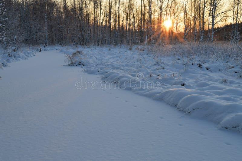 Fiume della foresta sotto la neve bianca di inverno ad alba fotografie stock libere da diritti