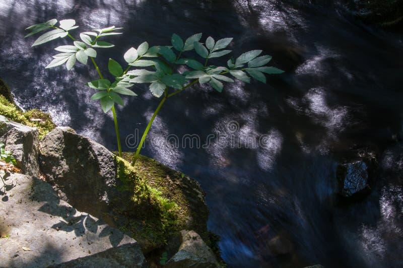 Fiume della montagna con le pietre fotografia stock libera da diritti