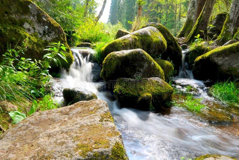 Fiume della montagna con le pietre muscose verdi e la piccola cascata Catturato nel parco nazionale di Sumava in repubblica Ceca immagini stock