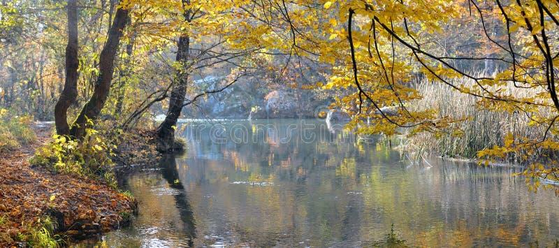 Fiume della montagna in legno di faggio di autunno immagini stock