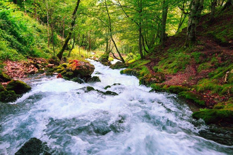 Fiume della montagna nella foresta variopinta di autunno immagini stock