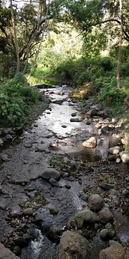 fiume della natura fotografie stock libere da diritti
