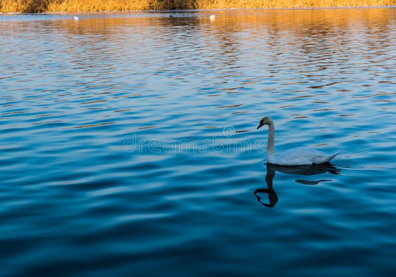 Fiume di amore dell'uccello fotografia stock