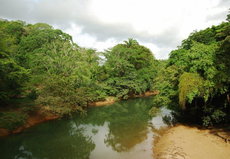 Fiume di Belize fotografie stock libere da diritti