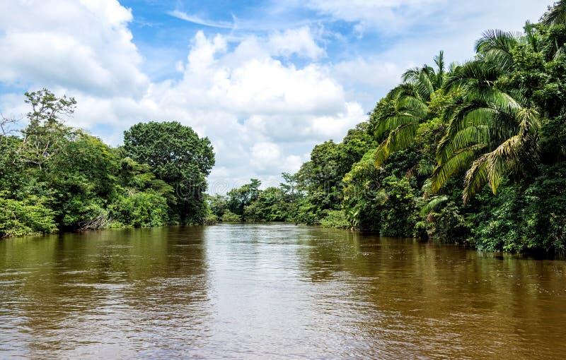 Fiume di Frio nella giungla della Costa Rica. immagine stock