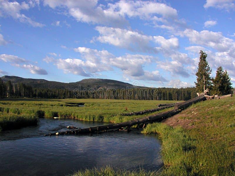 Fiume di Gibbon da Norris Campground al parco nazionale di Yellowstone fotografia stock libera da diritti