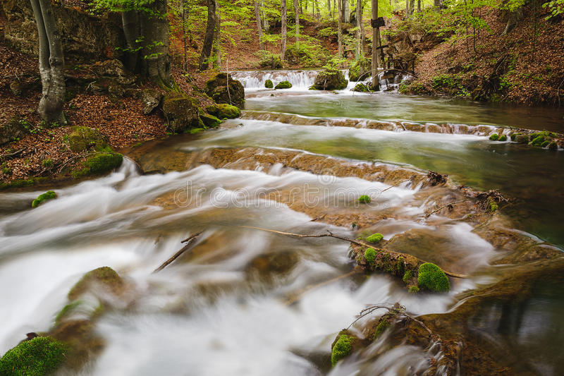 Fiume di Grza della foresta del fiume della montagna in primavera, Serbia immagini stock