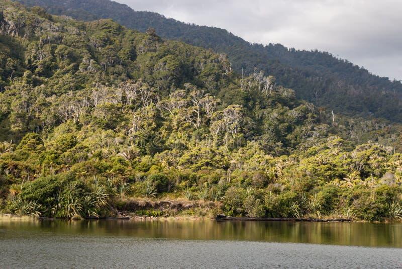 Fiume di Heaphy al parco nazionale di Kahurangi immagine stock libera da diritti