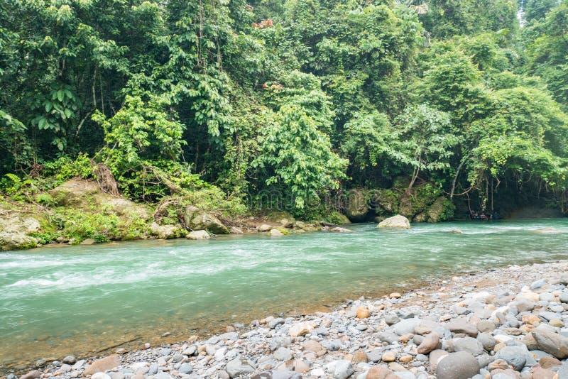 Fiume di Tangkahan, Indonesia Il paradiso nascosto in Sumatera immagine stock libera da diritti