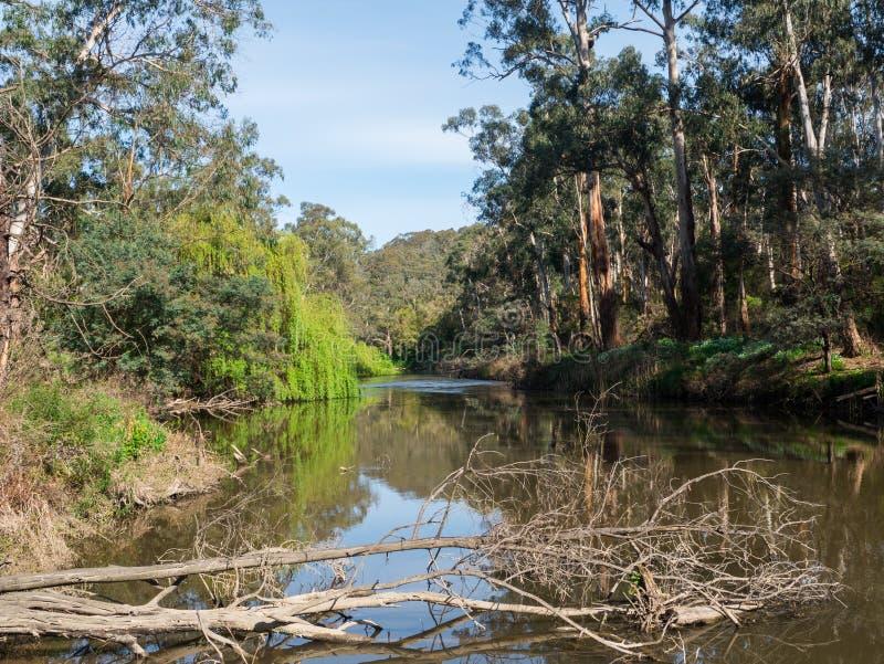 Fiume di Yarra che attraversa il sobborgo esterno di Warrandyte in Australia immagine stock libera da diritti