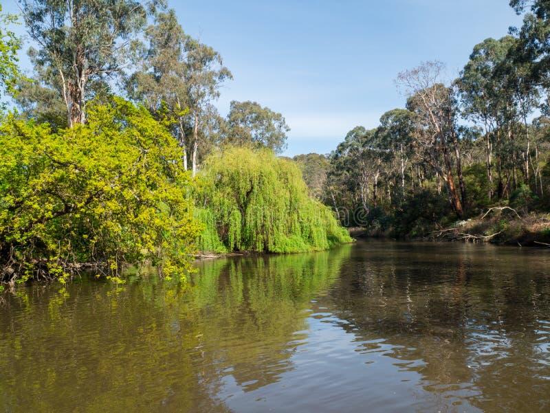 Fiume di Yarra che attraversa il sobborgo esterno di Warrandyte in Australia immagini stock libere da diritti