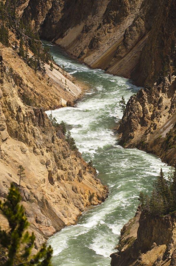 Fiume di Yellowstone fotografia stock libera da diritti