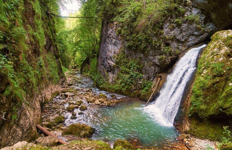Fiume e gola in Romania fotografia stock libera da diritti