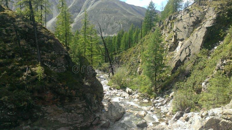 fiume freddo della montagna della Repubblica di Buriazia fotografia stock