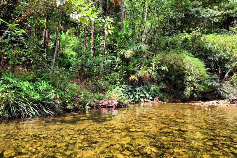 Fiume in giungla, Tailandia fotografie stock