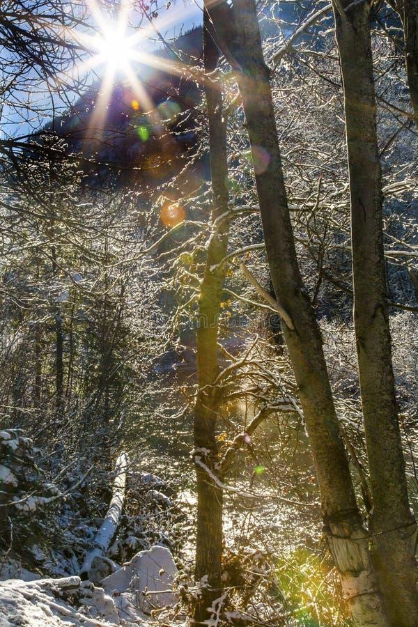 Fiume Leavenworth Washington di Wenatchee di Sun del ghiaccio della neve delle foglie di inverno fotografia stock libera da diritti