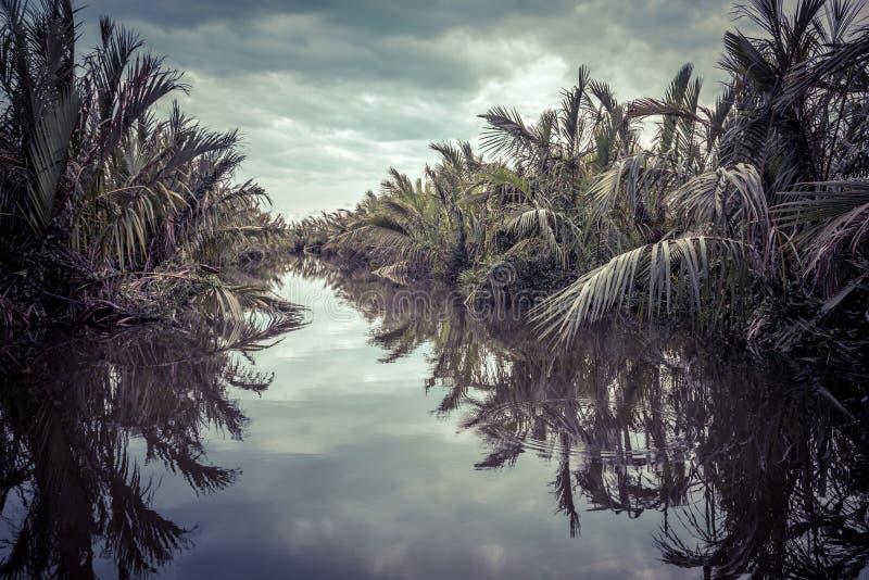 Fiume misterioso in una giungla al crepuscolo vicino a Tangalle, Sri Lanka immagine stock