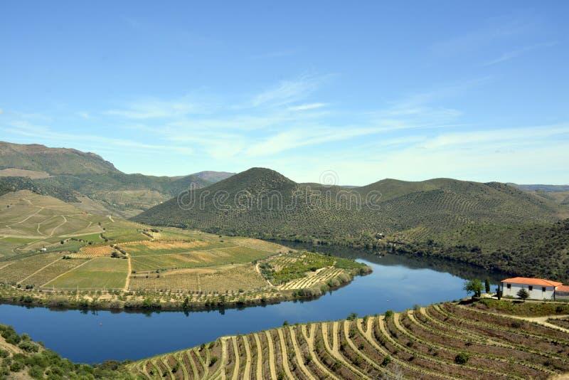 Fiume, montagne e vigne del Duero fotografie stock