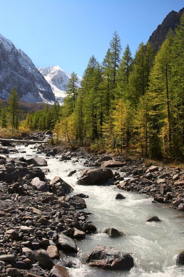 Fiume, montagne ed alberi. fotografia stock libera da diritti