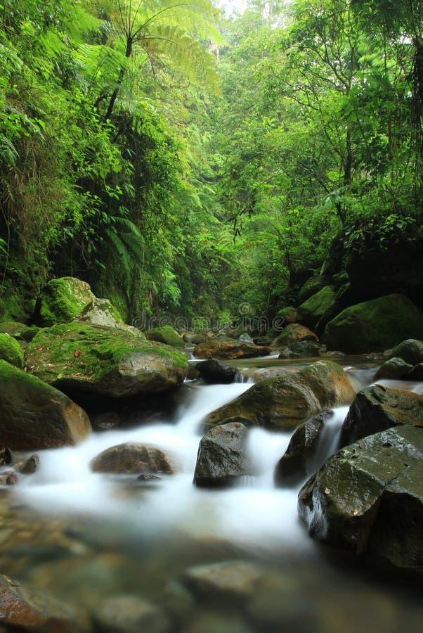 Fiume nella foresta fotografia stock libera da diritti