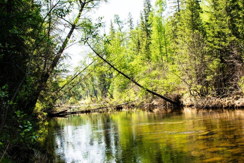Fiume nella vista della foresta del fiume con gli alberi, vegetazione sulle banche, riflessioni nell'acqua e colori luminosi fotografia stock