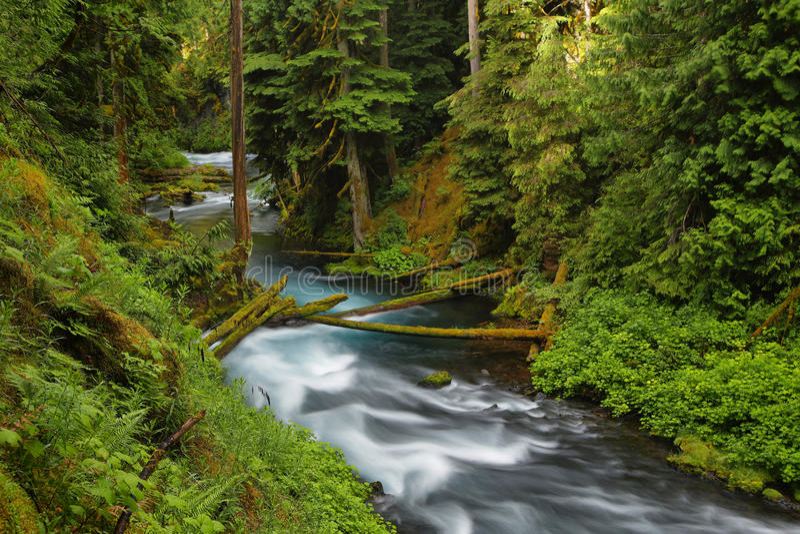 Fiume Oregon di McKenzie immagini stock