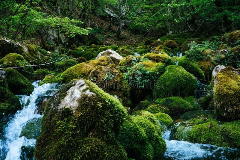 Fiume in profondità in composizione nella natura della foresta della giungla Flusso della montagna fra le pietre muscose Colpo de immagine stock libera da diritti