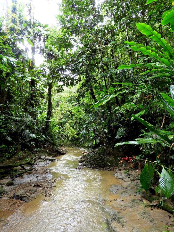 Fiume profondo dell'Amazzonia, Ecuador fotografia stock libera da diritti