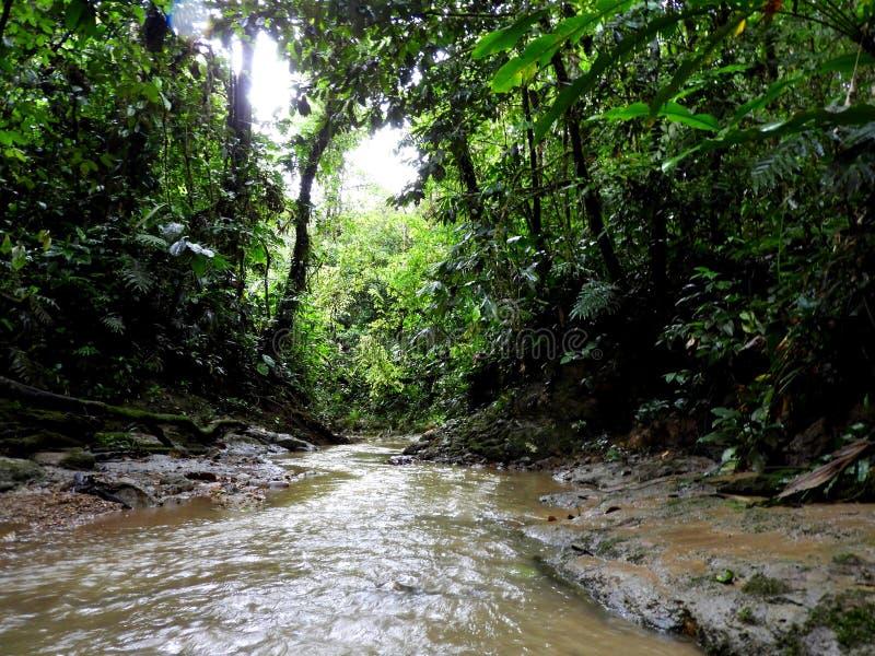 Fiume profondo dell'Amazzonia, Ecuador immagini stock libere da diritti