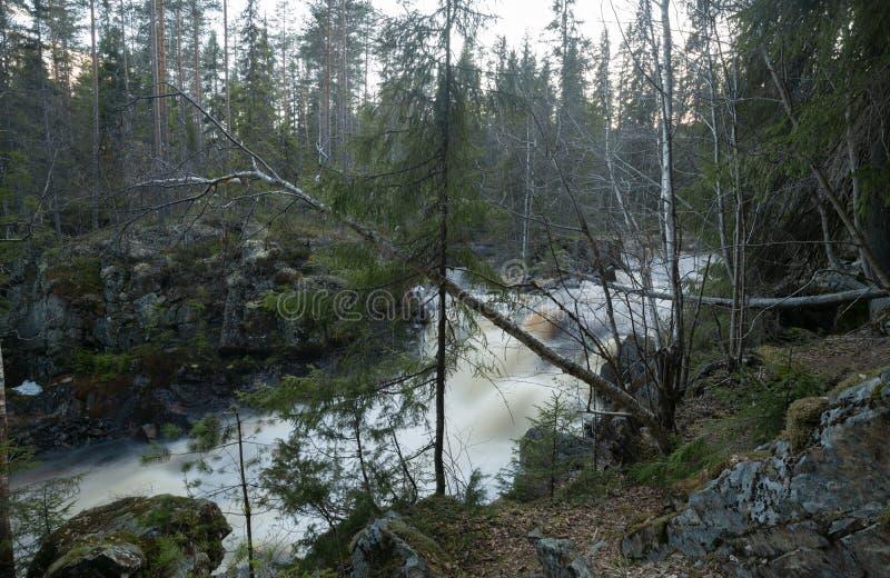Fiume selvaggio in molla in anticipo della foresta immagine stock libera da diritti