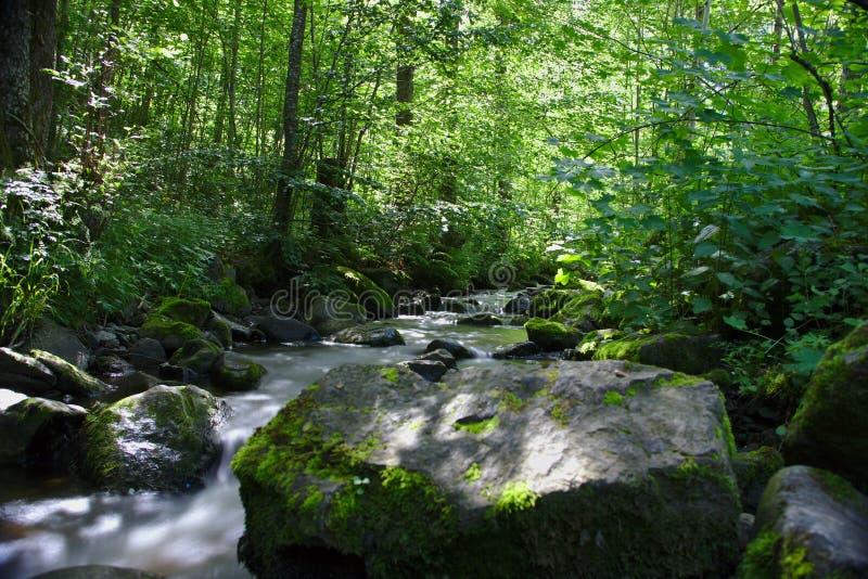 Fiume selvaggio nel legno del Ravennaschlucht immagini stock libere da diritti