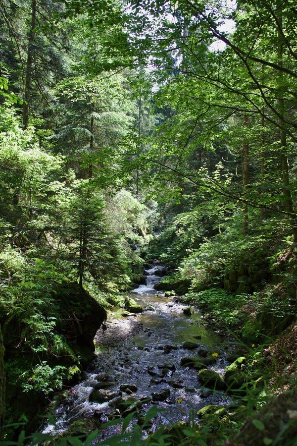 Fiume selvaggio nel Ravennaschlucht di estate immagine stock libera da diritti