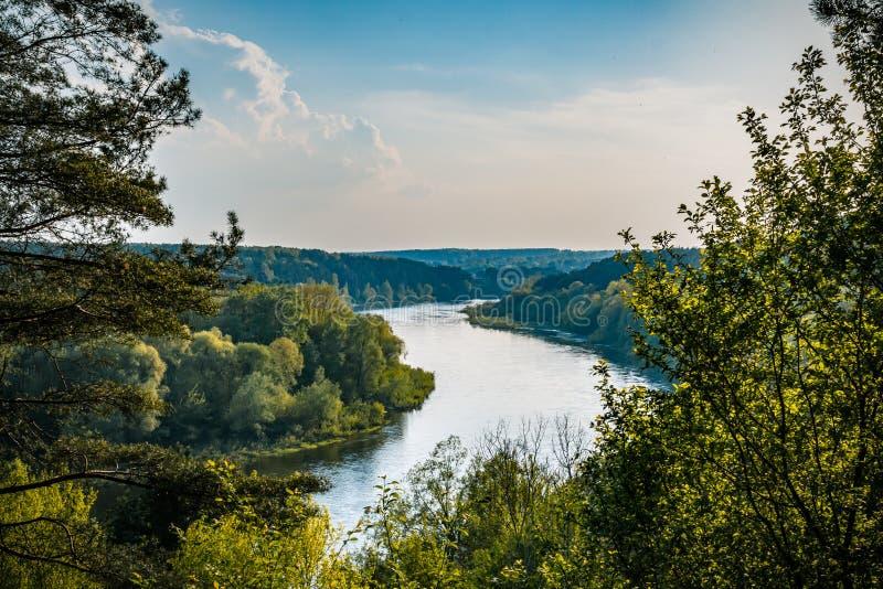 Fiume silenzioso selvaggio Neman Panorama dell'acqua di fiume della foresta di estate Riflessione del fiume della foresta di esta fotografie stock libere da diritti
