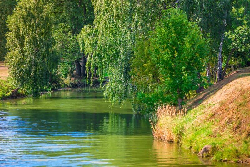Fiume stretto ed alberi verdi d'attaccatura immagine stock libera da diritti