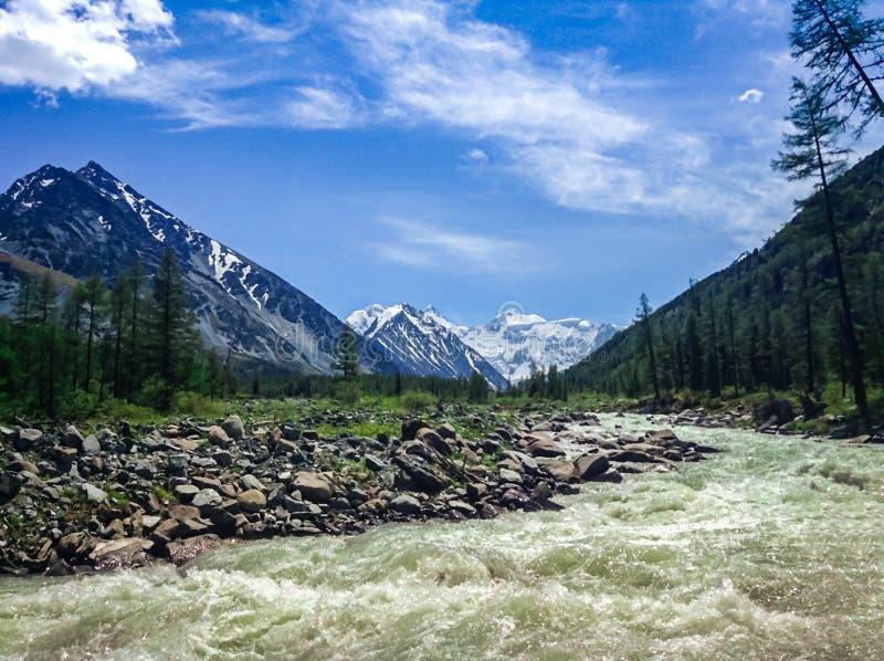 Fiume tempestoso della montagna al piede delle montagne innevate di Altai Concetto del viaggio e del rilassamento estremo immagine stock