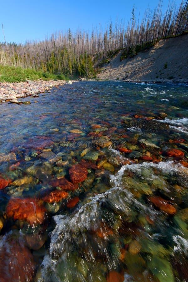 Fiume a testa piatta del North Fork - Montana immagini stock