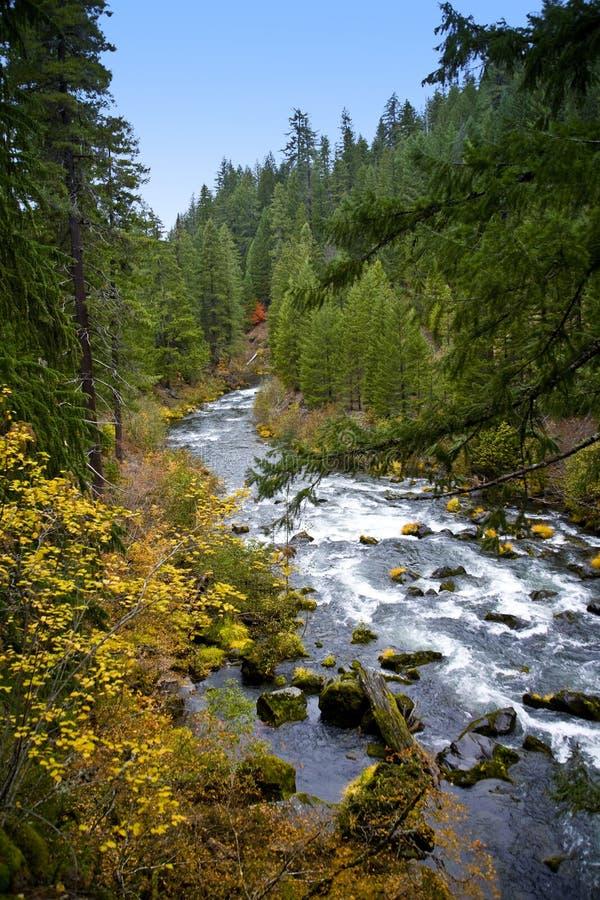 Fiume tolto le erbacce da scenico - Oregon fotografia stock