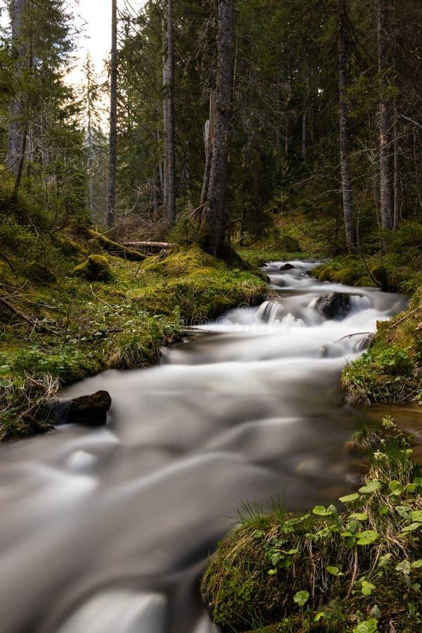 Fiume in una foresta fotografia stock