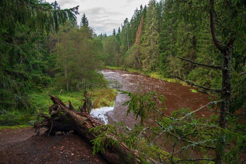 fiume veloce in foresta fotografia stock
