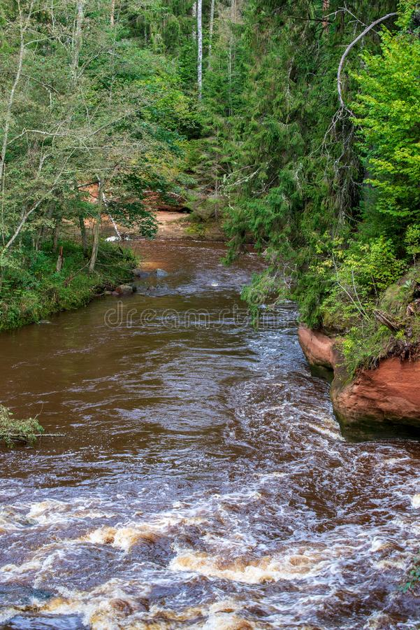 fiume veloce in foresta fotografia stock libera da diritti