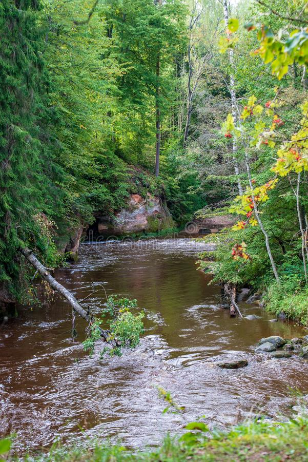 fiume veloce in foresta immagini stock libere da diritti
