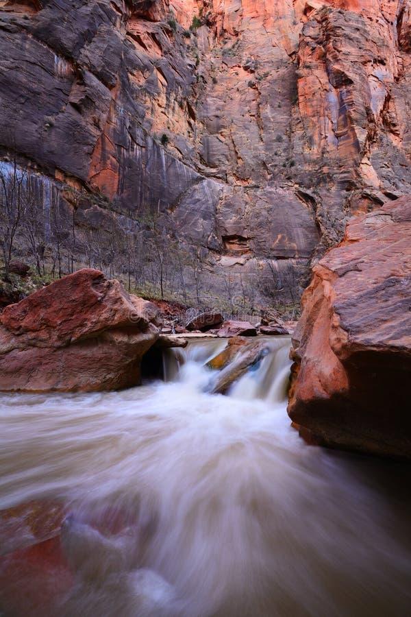 Fiume vergine in Zion National Park fotografia stock