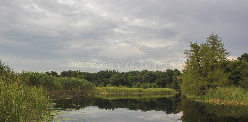 Fiume vicino alla foresta fotografia stock libera da diritti