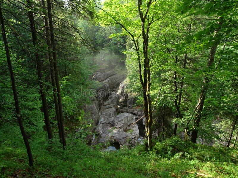 Download Fiume Walchen Vicino Al Lago Sylvenstein Immagine Stock - Immagine di canyoning, clammy: 117979823