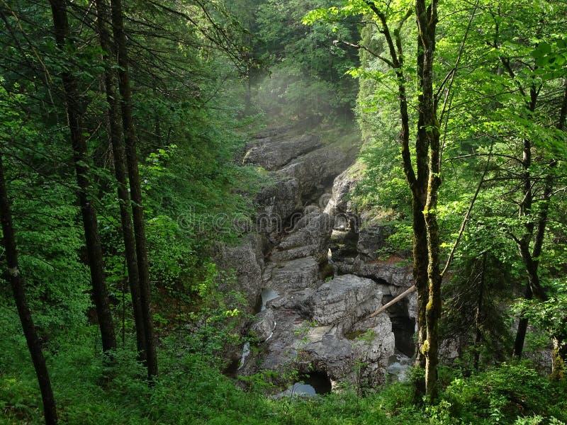Download Fiume Walchen Vicino Al Lago Sylvenstein Fotografia Stock - Immagine di solo, clammy: 117979824