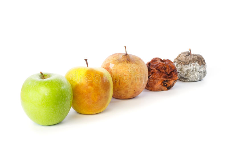 Five apples in a row in various states of decay. Against white background stock photos