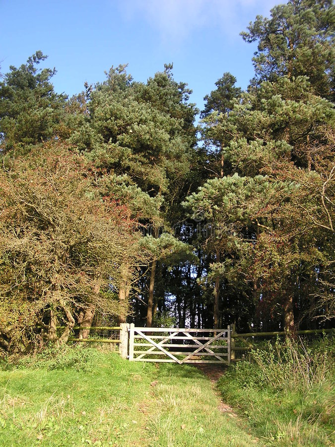 Free Five Bar Gate Into The Woods Stock Images - 6764644