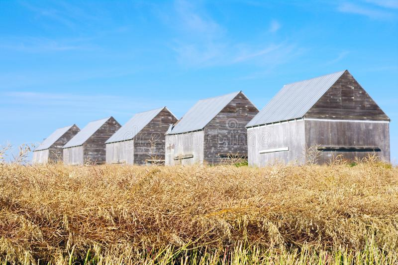 Five barns in field. In rural Alberta royalty free stock image