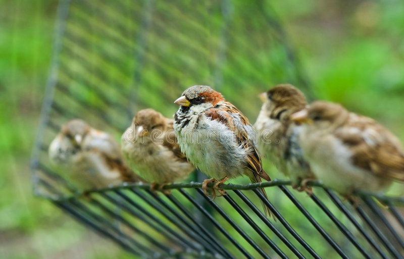 Five birds royalty free stock images