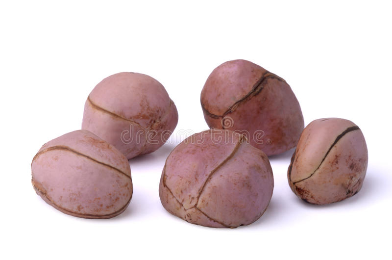 Five cola nuts royalty free stock photo
